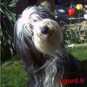 sigurd.fr