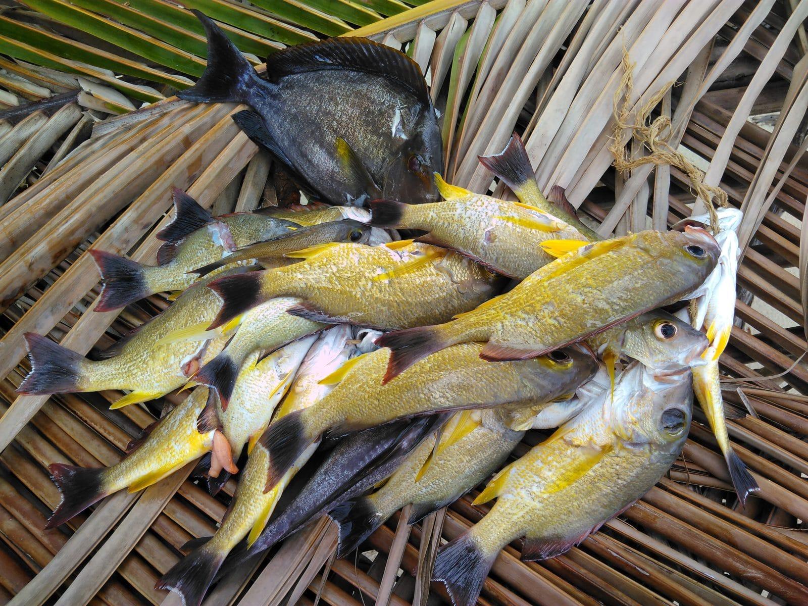 Vanuatu, Island Atoll. La pêche du jour.