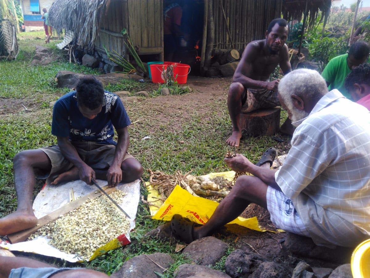 Vanuatu, Ureparapara. Préparation du kava.