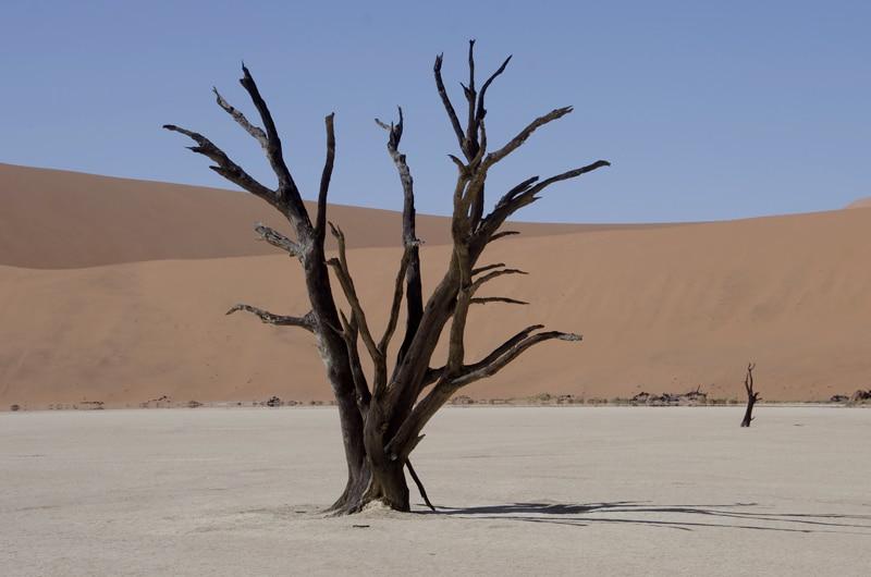 Voyage en Namibie effectué en juillet 2012. Exploration du Waterberg, parc d\'Etosha, Massif du Brandberg, Damaraland, Parc de Spitzkoppe, Sessriem et Sossusvlei.