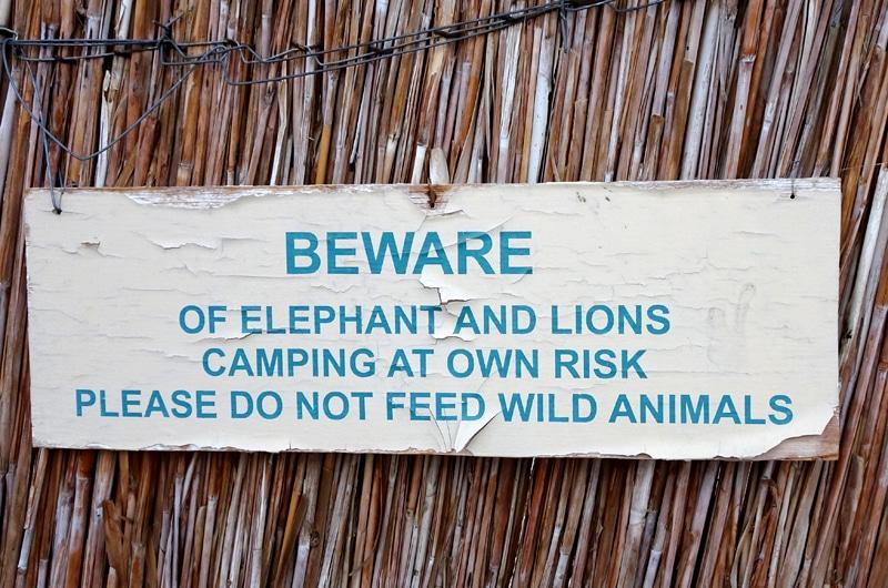 Il y a des lions et des éléphants, on campe à nos risques et périls à Rhino Camp Site.