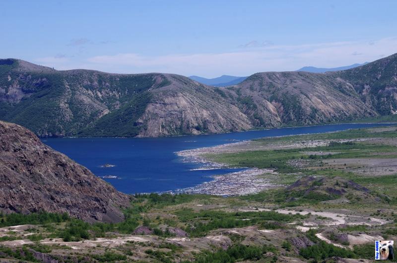 Lac Spirit au Mont Saint Helens.30 ans après l'éruption de 1980, de nombreux troncs flottent encore sur les bords du lac.
