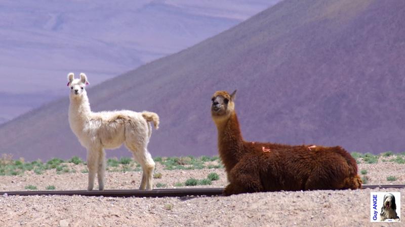 Argentine, région de la Puna,