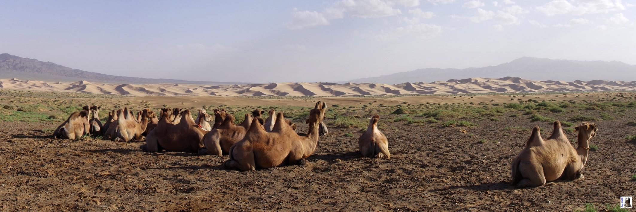 Les dunes de Khongor.