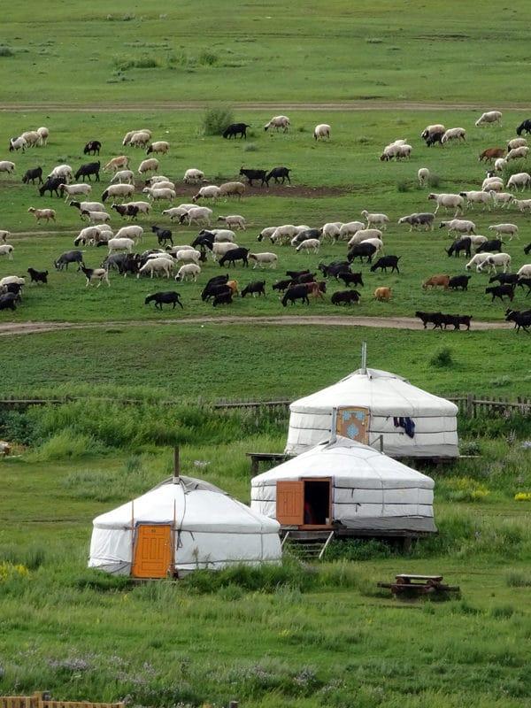 Des Gers, des chèvres des moutons, la Mongolie