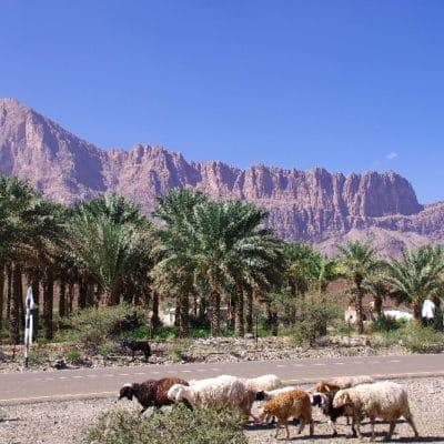 Les crêtes déchiquetées du Djebel Misht.