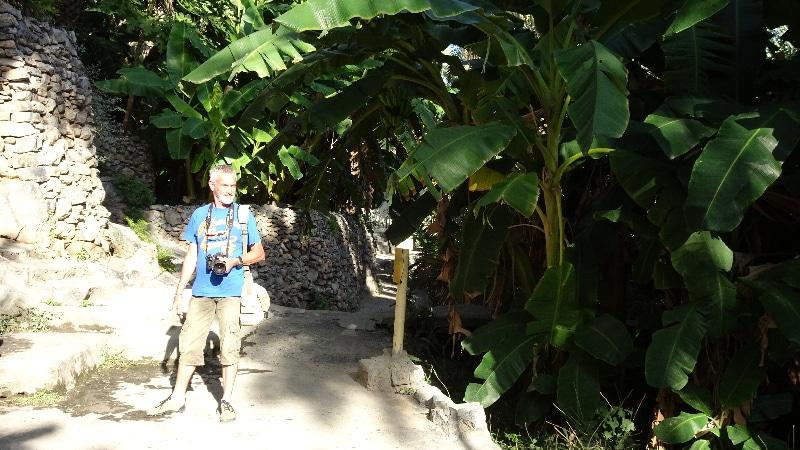 Le village de Misfat, grâce à l'irrigation des espèces tropicales prospèrent.