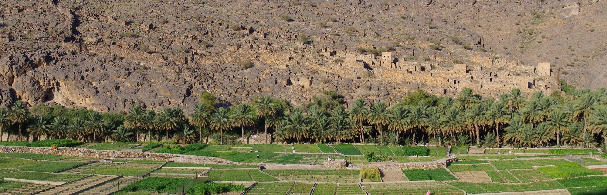 L'ancien village de Ghul et les cultures maraîchères.