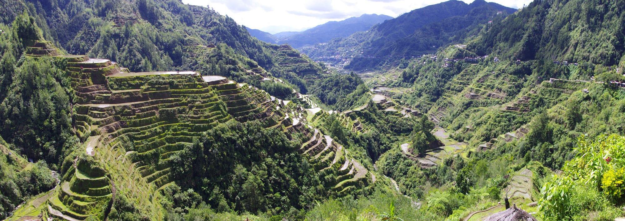 Les rizières en terrasses des Philippines.
