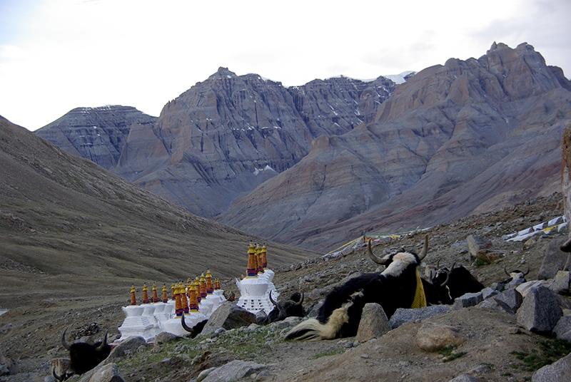 Les yaks de trait se reposent, le jour décline.