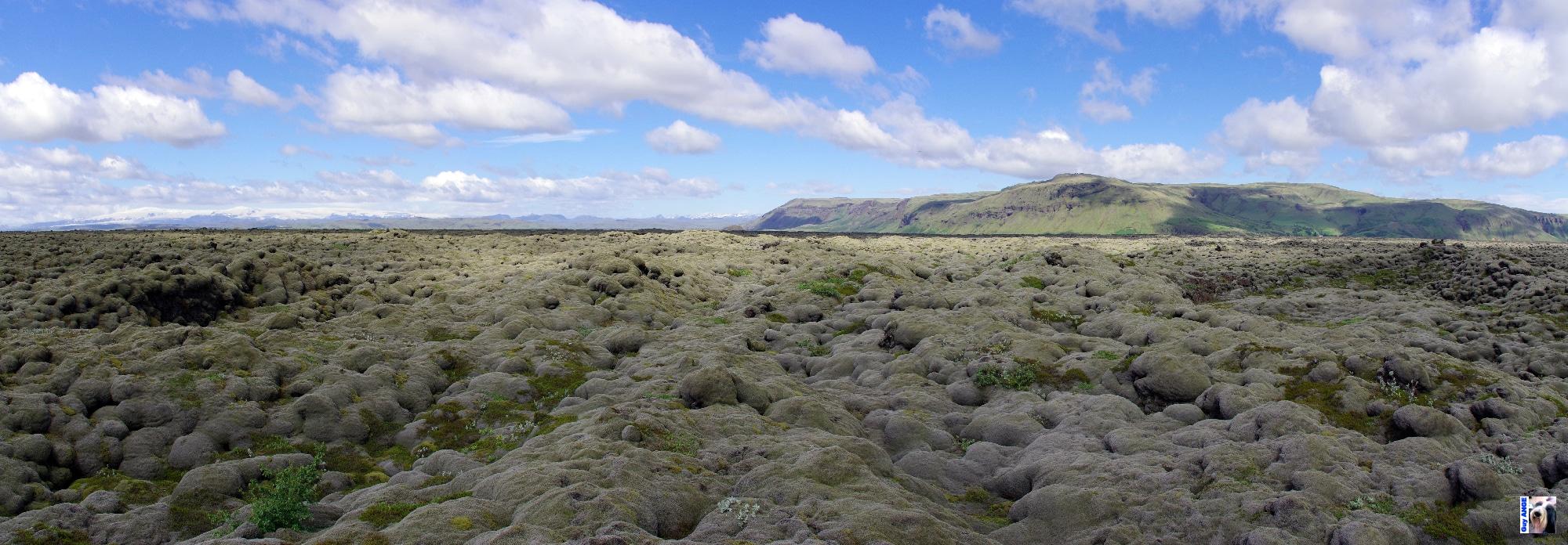 Route N°1, les anciennes coulées de lave recouvertes de mousse.