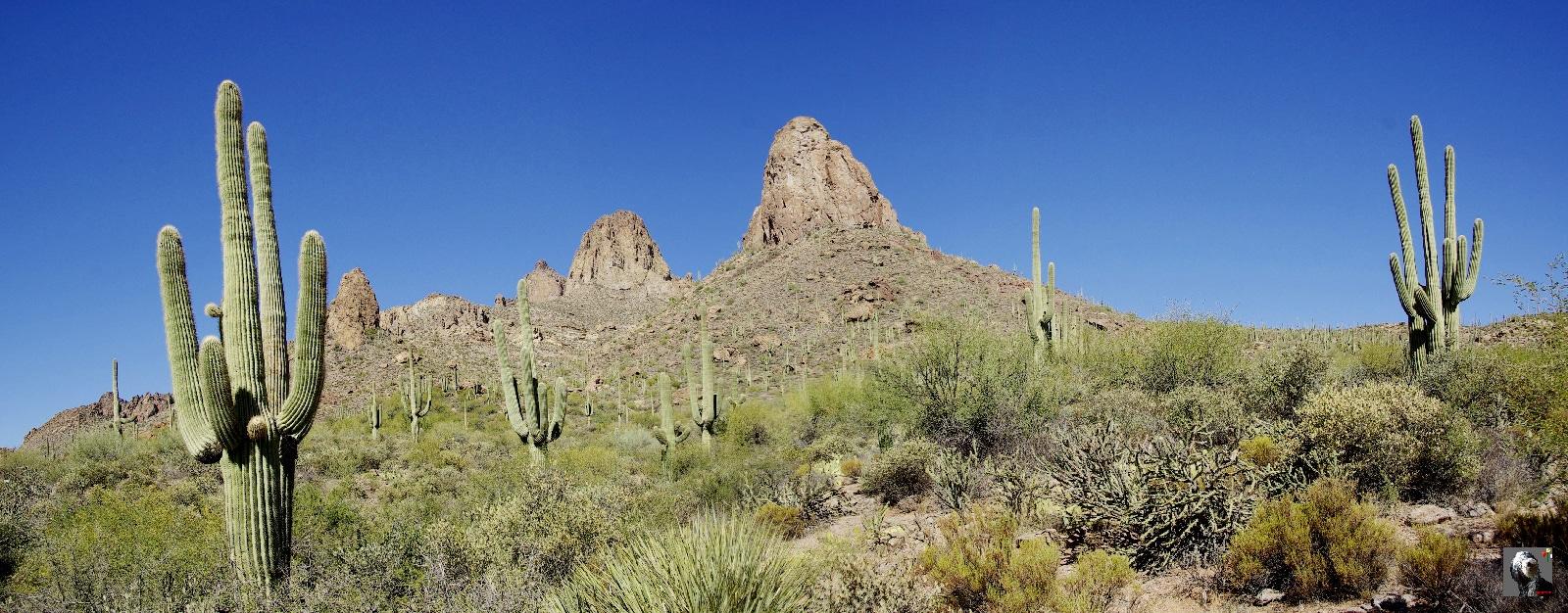 Arizona.